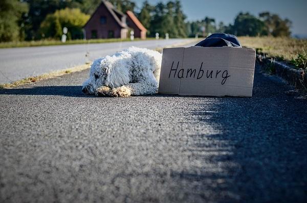 ผู้ขับขี่จึงสามารถเหยียบเบรกเพื่อลดความเร็วได้ เพื่อให้แรงปะทะกับสุนัขลดน้อยลง เกิดความเสียหายน้อยลงตามไปด้วย