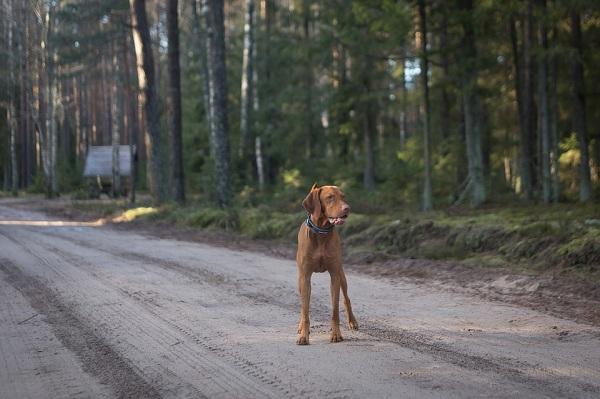 มีสติในการขับขี่ และชะลอบีบแตรเมื่อพบสุนัขกำลังจะข้ามถนน