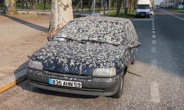 นกขี้ใส่รถ