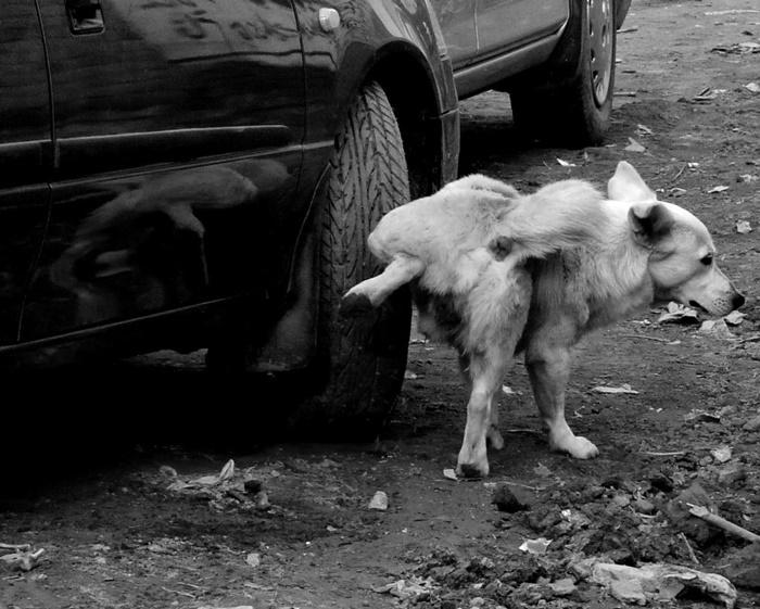 หมาฉี่ใส่ล้อรถ