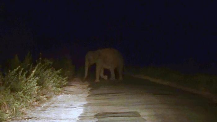 เจอช้างป่าตอนกลางคืน ไม่ควรปิดไฟหรือดับเครื่องยนต์