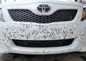 กำจัดคราบแมลงติดรถยนต์ในแบบต่างๆ