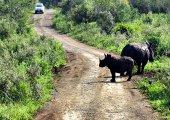ขับรถเที่ยวเขตอุทยานแห่งชาติแล้วเจอสัตว์ป่าขวางถนนควรทำอย่างไรครับ