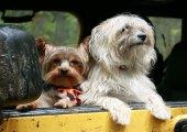 ขอเคล็ดลับพาสุนัขติดรถไปเที่ยวด้วยค่ะ