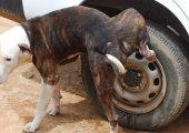 หมาฉี่ใส่ล้อรถ แก้ได้ง่าย ๆ ด้วย 4 วิธีนี้!
