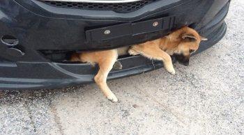 ขับรถชนสุนัข ผิดหรือไม่ !?
